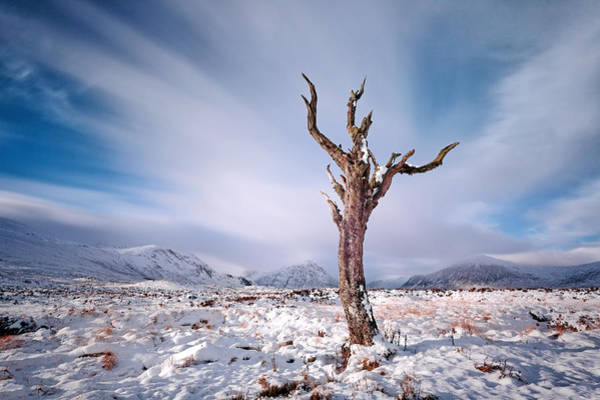 Photograph - Lone Tree In The Snow by Grant Glendinning