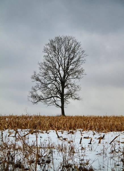 Wall Art - Photograph - Lone Tree In Winter by Dan Sproul