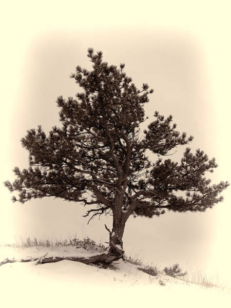 Photograph - Lone Tree In Winter by HW Kateley