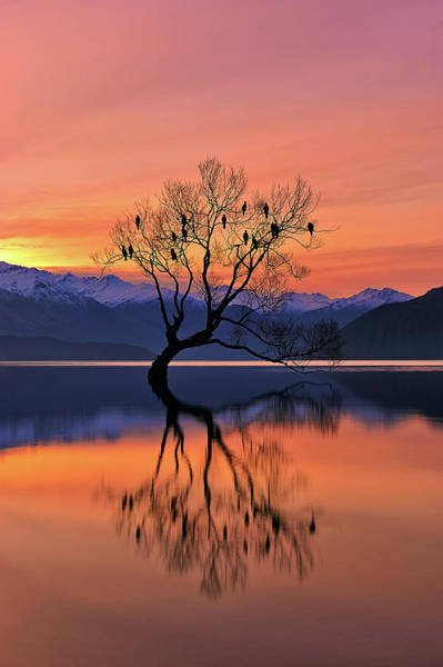 Clear Water Photograph - Lone Tree Is Not Lonely by Mei Xu
