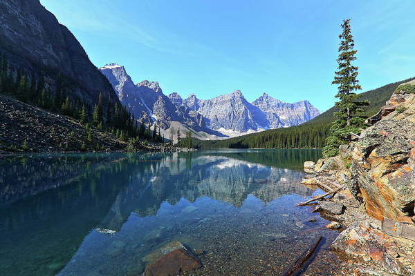 Moraine Lake Photograph - Lone Tree Moraine Lake by J.p.andersen Images