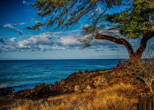 Photograph - Lone Tree by Omaste Witkowski