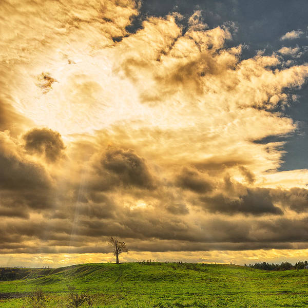 Wny Wall Art - Photograph - Lone Tree On A Knoll by Chris Bordeleau