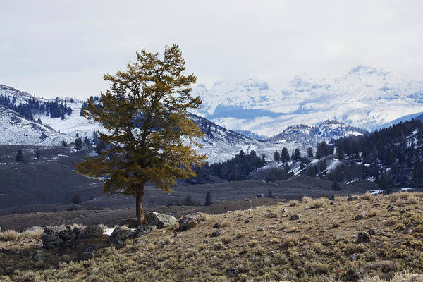 Endurance Wall Art - Photograph - Lone Tree On A Mountain Side In by Susan Dykstra / Design Pics