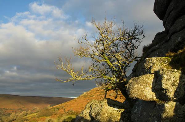 Photograph - Lone Tree On Bonehill Rocks by Pete Hemington
