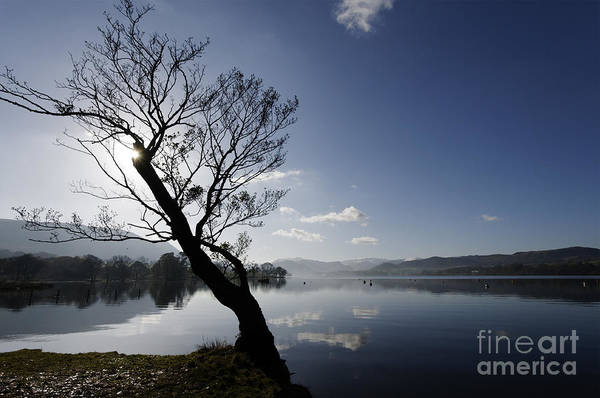 Ullswater Photograph - Lone Tree On Ullswater by Colin Woods