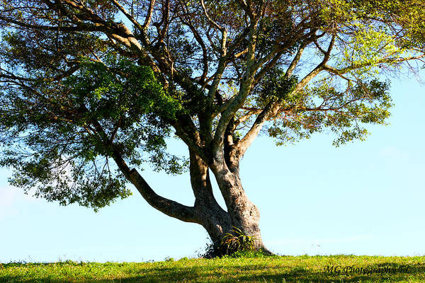 Photograph - The Lone Tree Original by Marty Gayler