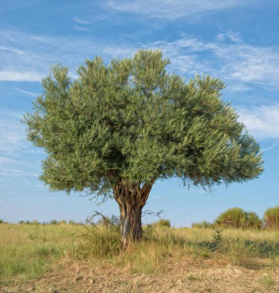 Olive Branch Digital Art - Lonely Olive Tree by Roy Pedersen