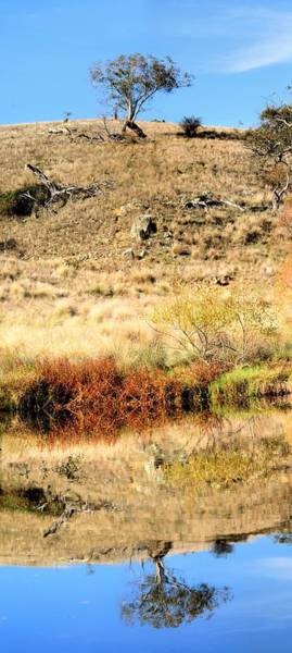 Photograph - Lone Tree With Reflection by David Rich