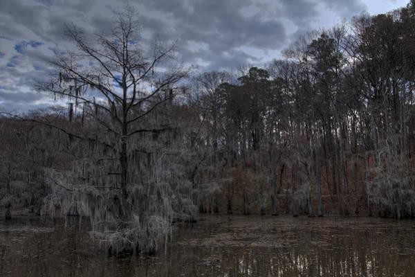 Photograph - Lonely Bald Cypress by Jonathan Davison