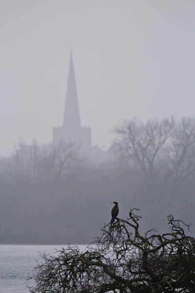 Wall Art - Photograph - Lonely Cormorant by Chris Whittle