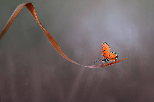 Orange Photograph - Lonely by Edy Pamungkas