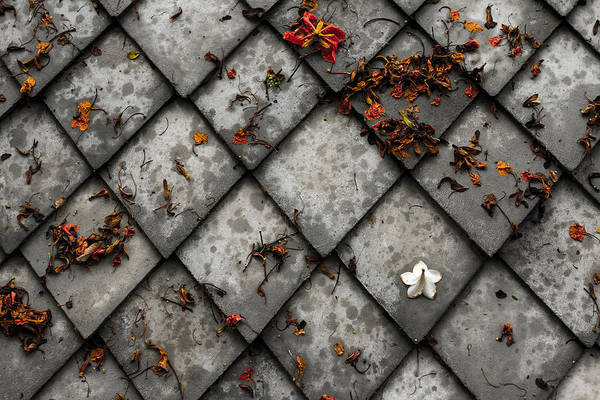 Litter Photograph - Lonely Flower by Justin Albrecht