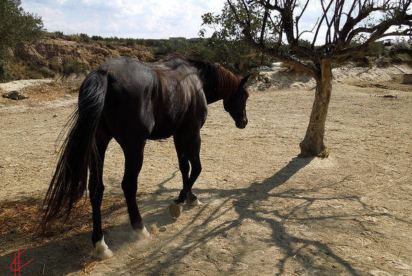 Photograph - Lonely Horse Missing Company by Colette V Hera  Guggenheim