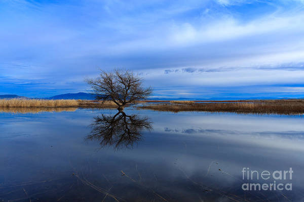 Photograph - Lonely One by Beve Brown-Clark Photography