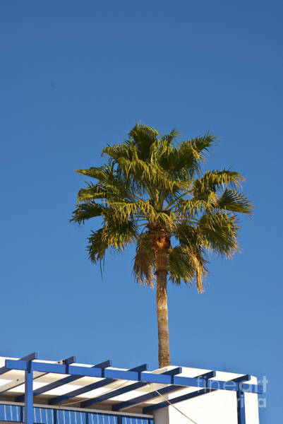 Photograph - Lonely Palm by James Lavott