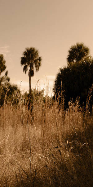 Photograph - Lonely Palm by Steve Sperry