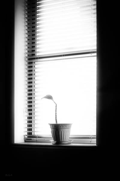 Photograph - Lonely Plant by Bob Orsillo