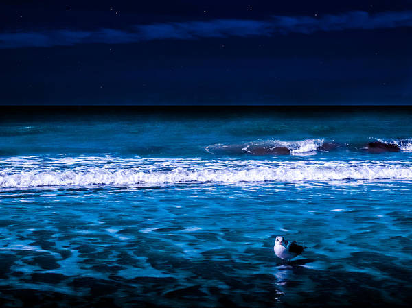 Lonely Seagull Art Print