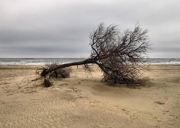 Photograph - Lonely Tree by Daliana Pacuraru