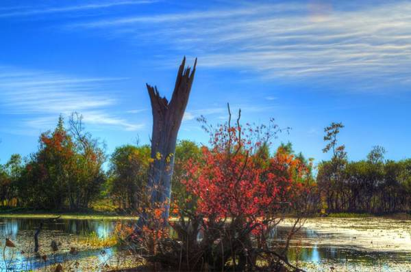 Brazos Bend State Park Wall Art - Photograph - Lonely Tree by David Morefield