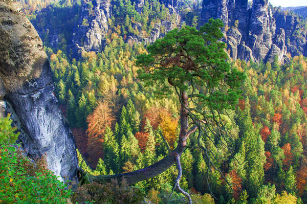 Lonely Tree In The Elbe Sandstone Mountains Art Print
