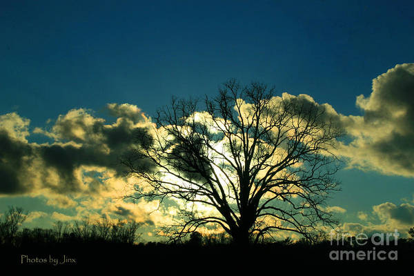 Wall Art - Photograph - Lonely Tree.... by Jinx Farmer