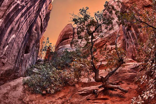 Wall Art - Photograph - Lonely Tree by Juan Carlos Diaz Parra