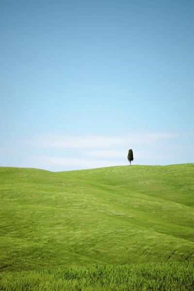 Pasquale Photograph - Lonely Tree On Green Hills by Nico De Pasquale Photography