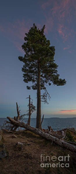 The Edge Photograph - Lonely Tree Overlooking The Ocean by Michael Ver Sprill