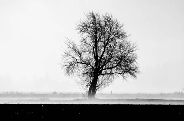 Vernon County Photograph - Lonely Tree by Puget  Exposure