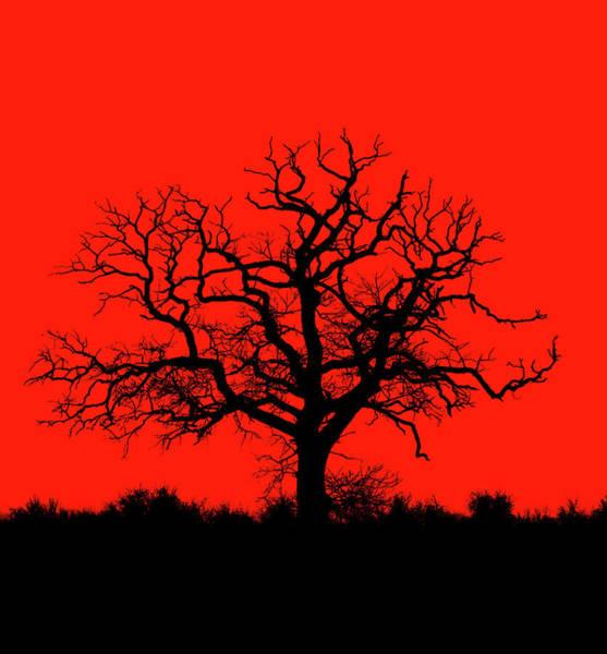 Photograph - Lonely Tree by Roland Shainidze Photogaphy