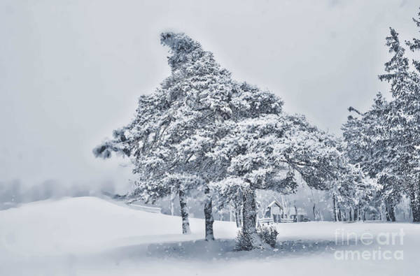 Photograph - Lonely Winter Pinetree Enhanced by Jim Lepard