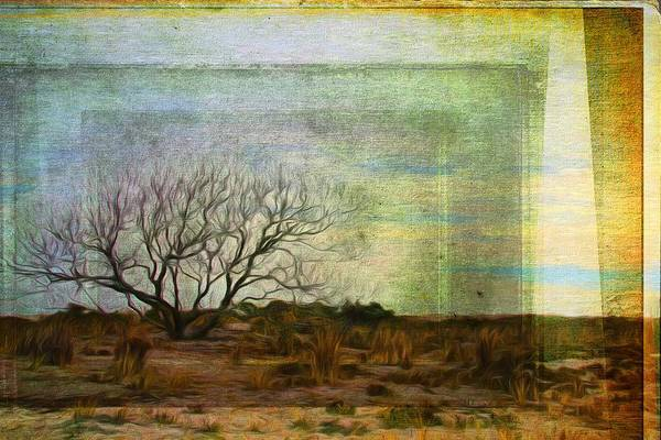 Photograph - Lonelysticks by Alice Gipson