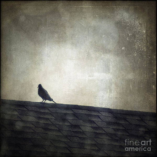 Wall Art - Photograph - Lonesome Dove by Trish Mistric