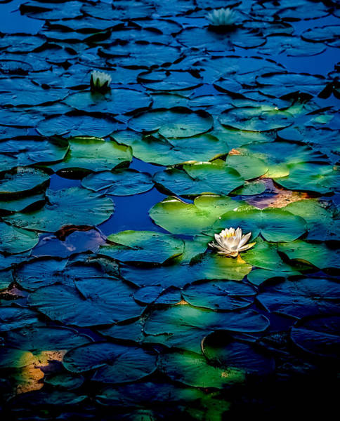 Photograph - Lonesome Lily by Jim DeLillo