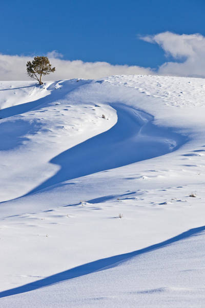 Photograph - Lonesome Pine by D Robert Franz