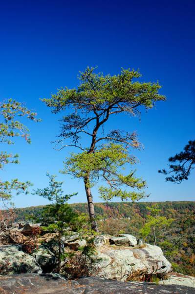 Wall Art - Photograph - Lonesome Pine by Douglas Barnett