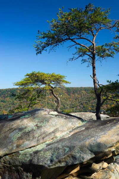 Wall Art - Photograph - Lonesome Pines by Douglas Barnett