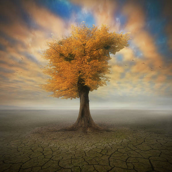 Dry Photograph - Lonesome by Piotr Krol (bax)