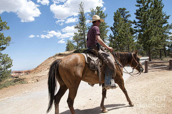 Photograph - Lonesome Rider by Brenda Kean