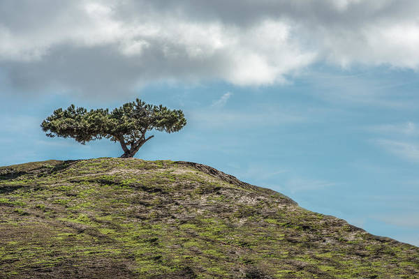 Photograph - Lonesome Tree by Paul Johnson