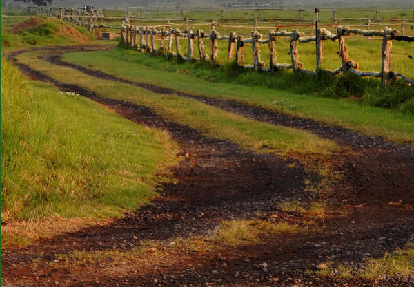 Photograph - Long Dirt Road by Pamela Walton