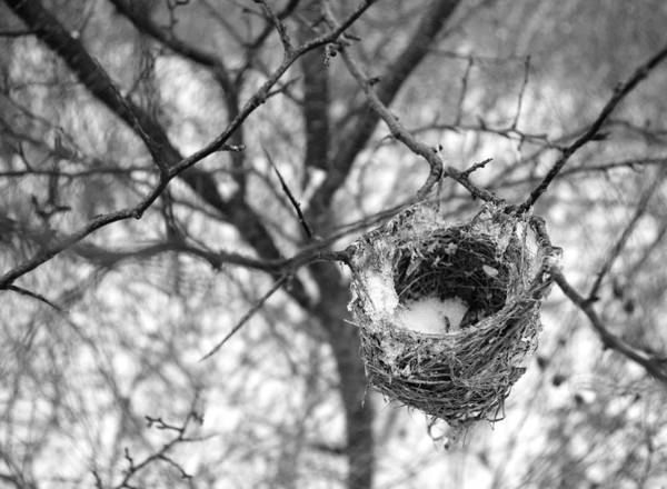 Empty Nest Wall Art - Photograph - Long Gone by Indigo Wild Photography