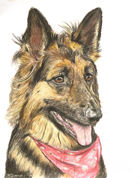 Pastel - Long Haired German Shepherd In Red Bandana by Kate Sumners
