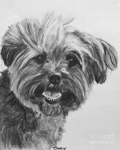 Drawing - Long Haired Yorkshire Terrier by Kate Sumners