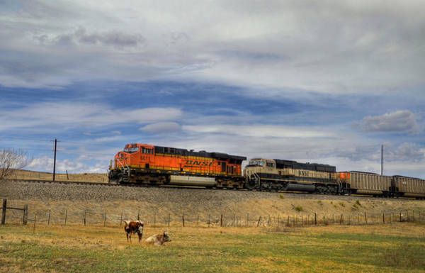 Wall Art - Photograph - Long Horn Cattle And Coal Train by Ken Smith