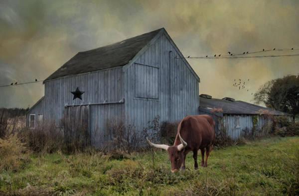 Photograph - Long Horns by Robin-Lee Vieira
