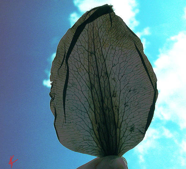 Photograph - Long Live The Leaf by Colette V Hera  Guggenheim