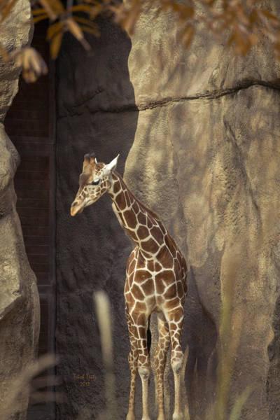 Photograph - Long Neck Louie  by Trish Tritz